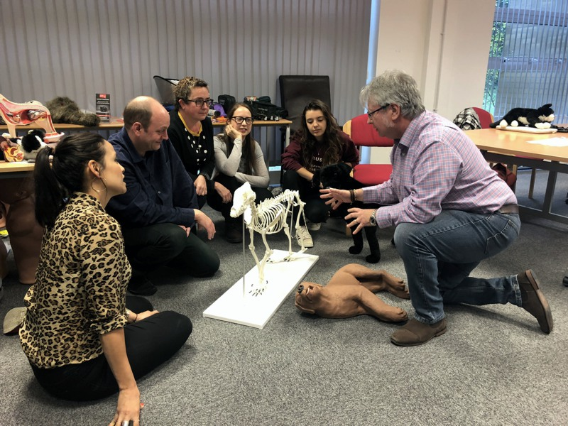 Dog First Aid Training Courses from LTS